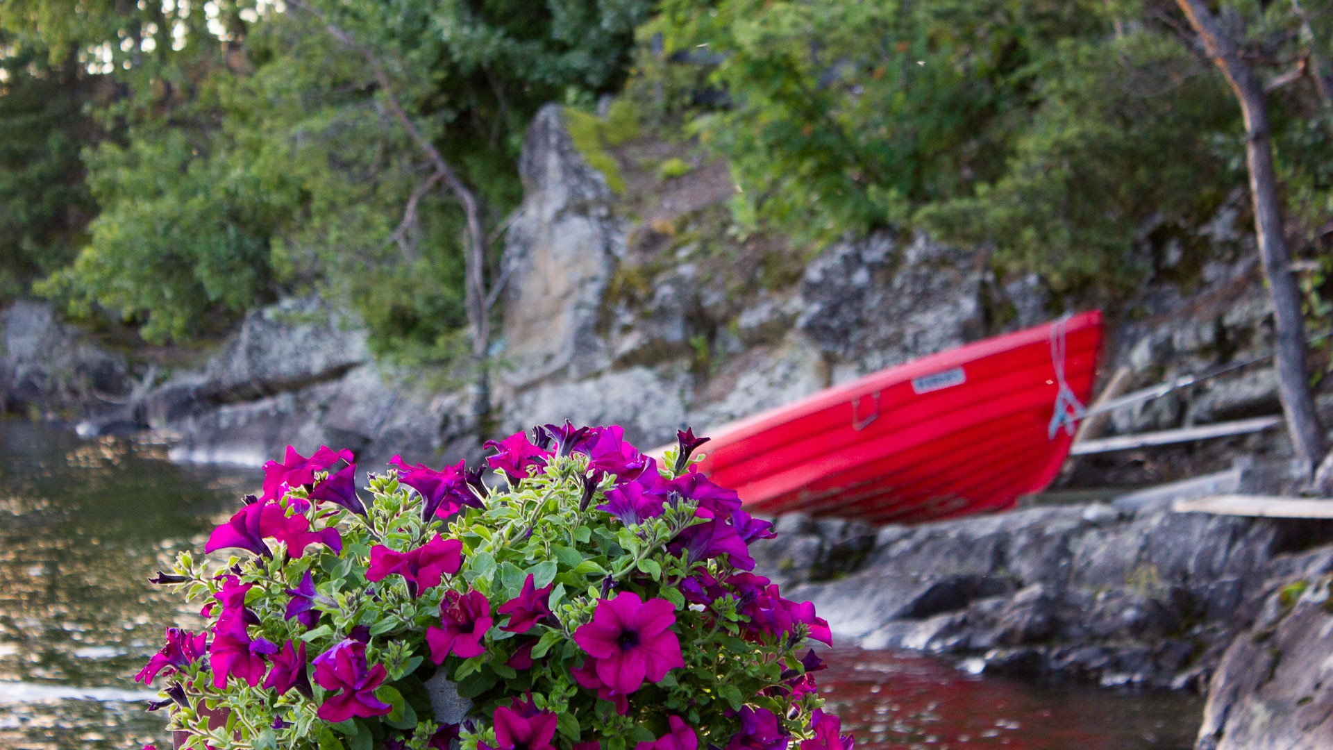 Norwegian flowers and fishing
