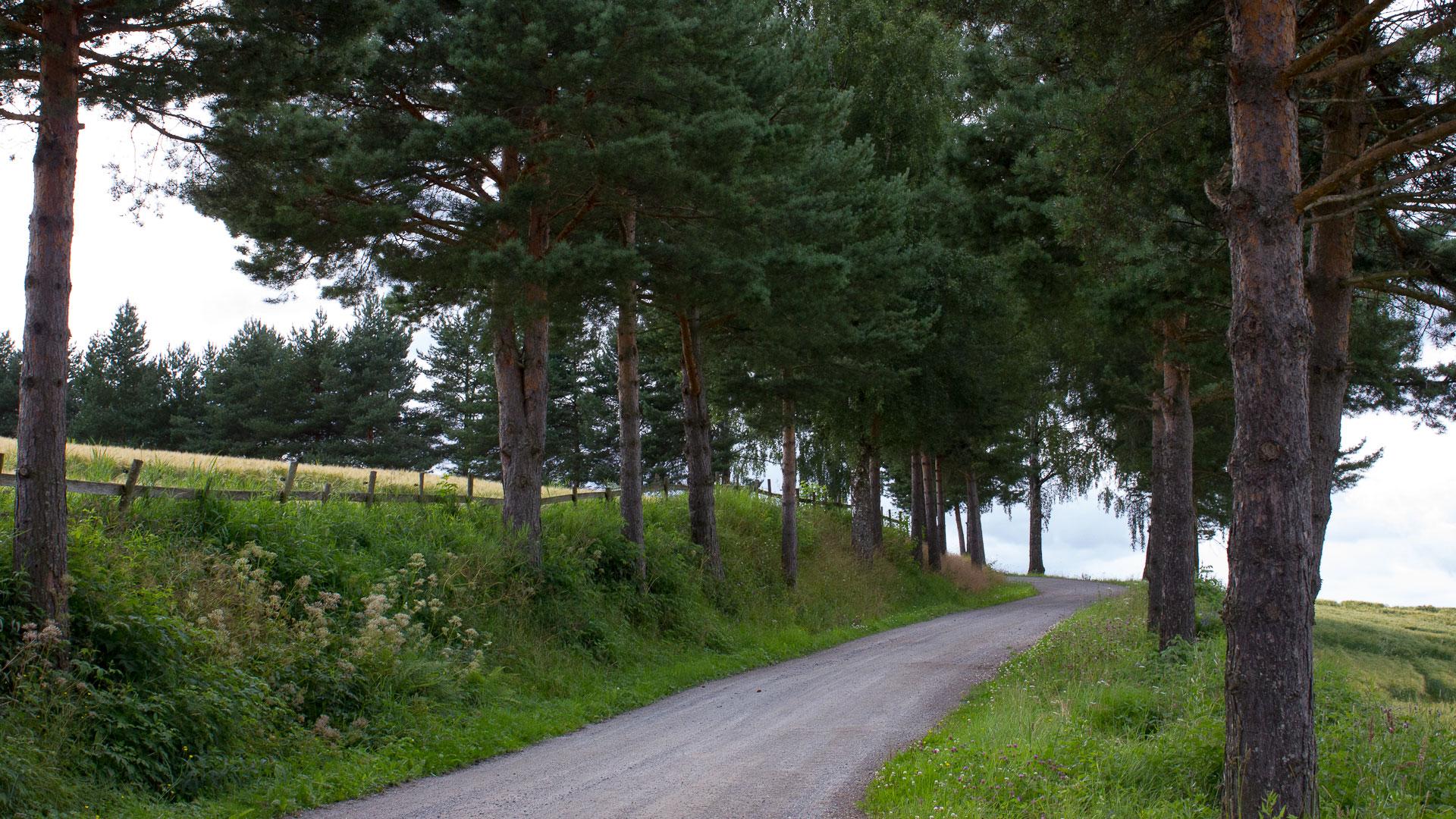 Deserted driveway
